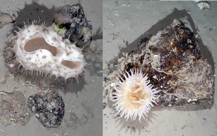 এন্টার্কটিকায় বরফে নতুন প্রজাতির সামুদ্রিক প্রাণী