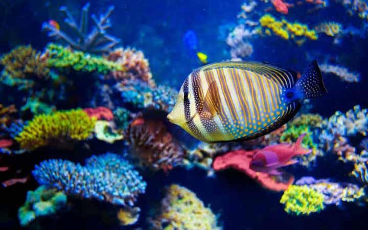 রোগের ঝুঁকি কমায় যেসব মাছ