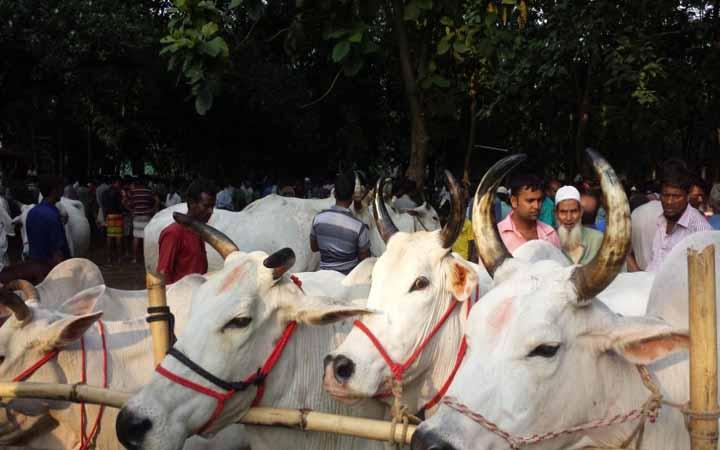 আগামীকাল থেকে রাজধানীর ২৪টি পশুর হাটে বেচাকেনা শুরু হচ্ছে